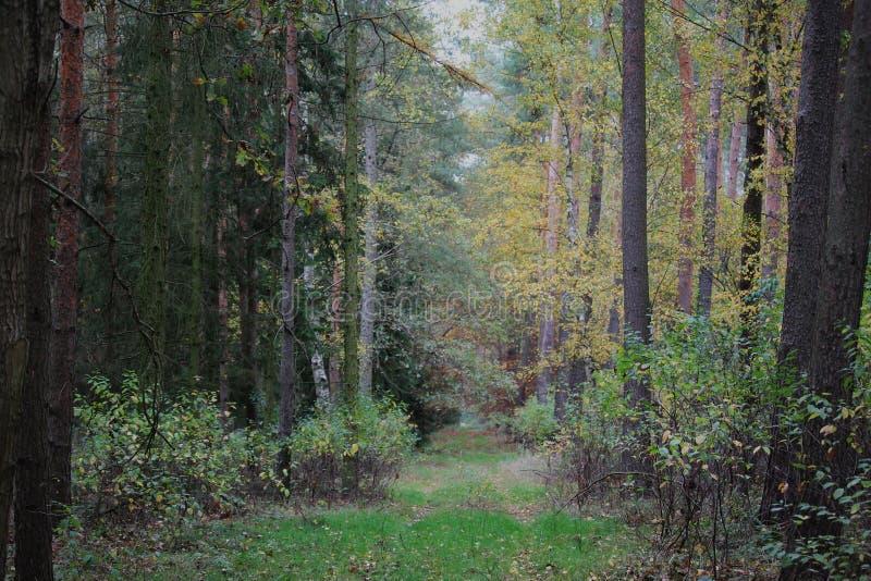 Όμορφο φθινοπωρινό δάσος στην Ευρώπη στοκ εικόνα