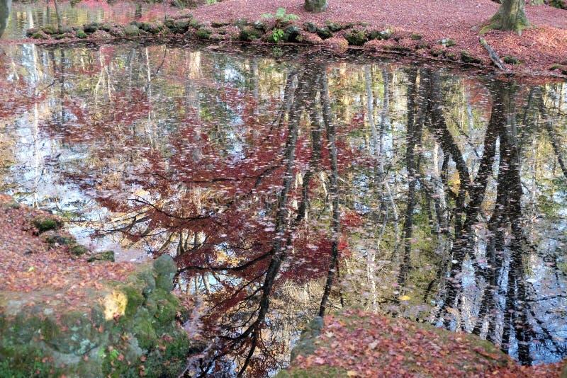 Όμορφο φθινόπωρο με την αντανάκλαση στο νερό στοκ φωτογραφία με δικαίωμα ελεύθερης χρήσης