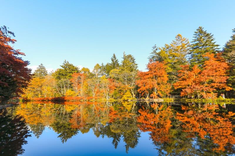 Όμορφο φθινόπωρο της Ιαπωνίας στη λίμνη Kumoba ή Kumoba ike Karuizawa στοκ φωτογραφία με δικαίωμα ελεύθερης χρήσης