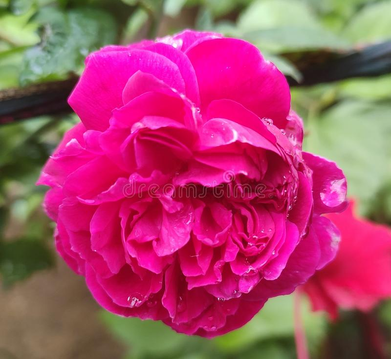 Όμορφο φρέσκο πολυ λουλούδι χρώματος στοκ φωτογραφία με δικαίωμα ελεύθερης χρήσης