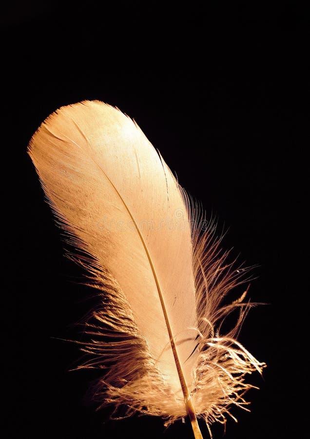 όμορφο φτερό στοκ φωτογραφία με δικαίωμα ελεύθερης χρήσης