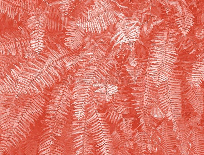 Όμορφο φυσικό κενό σχέδιο φτερών με το κύριο καθιερώνον τη μόδα κοράλλι διαβίωσης Τέλειο υπόβαθρο με τα τροπικά φύλλα μιας φτέρης στοκ φωτογραφία με δικαίωμα ελεύθερης χρήσης