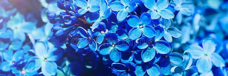 Όμορφο φυσικό πανοραμικό υπόβαθρο Μπλε ιώδη λουλούδια στοκ εικόνες