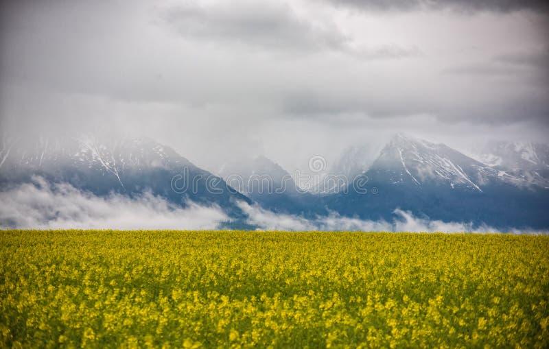 Όμορφο φυσικό τοπίο άνοιξη με τον κίτρινο τομέα συναπόσπορων και τα δραματικά σύννεφα που καλύπτουν τα βουνά στο υπόβαθρο στοκ εικόνα με δικαίωμα ελεύθερης χρήσης