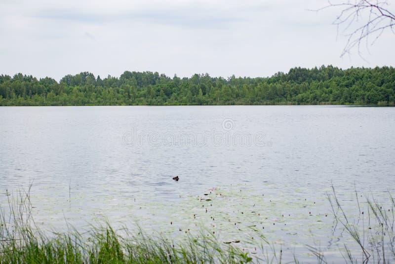 Όμορφο φυσικό τοπίο του πράσινου δάσους της λίμνης στοκ φωτογραφία