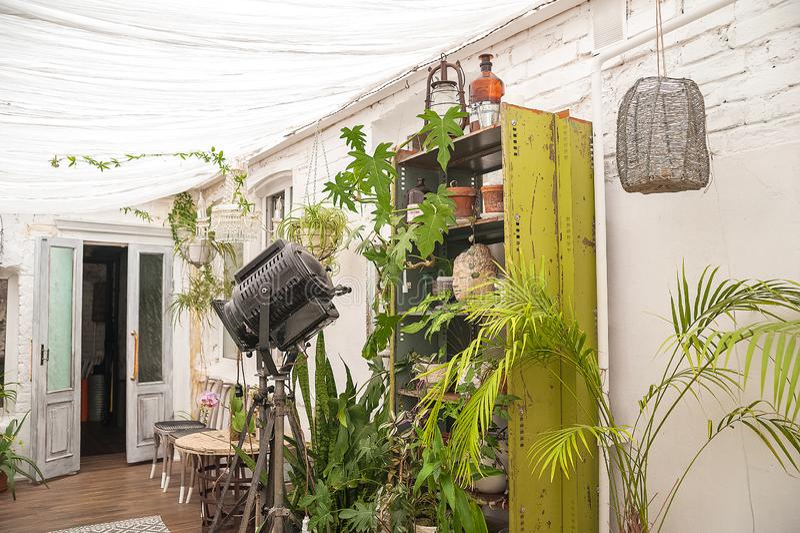 Όμορφο φυσικό υπόβαθρο των εσωτερικών εγκαταστάσεων, θερμοκήπια Αστική ζούγκλα, μια θέση για το υπόλοιπο και χαλάρωση Ορχιδέες, ε στοκ φωτογραφία με δικαίωμα ελεύθερης χρήσης