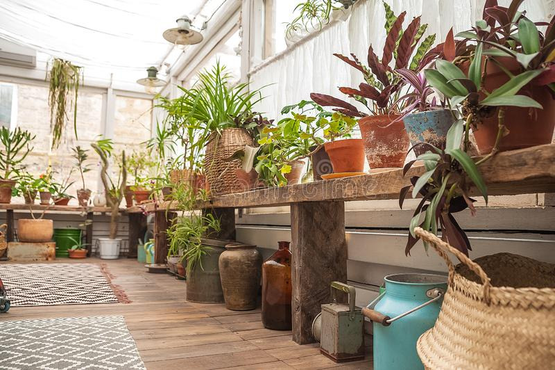 Όμορφο φυσικό υπόβαθρο των εσωτερικών εγκαταστάσεων, θερμοκήπια Αστική ζούγκλα, μια θέση για το υπόλοιπο και χαλάρωση Ορχιδέες, ε στοκ εικόνα με δικαίωμα ελεύθερης χρήσης