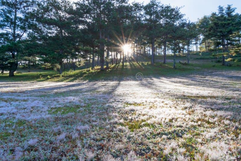 Όμορφο φως του ήλιου στο ρόδινες λιβάδι και τη δροσιά στη χλόη στο μέρος 7 ανατολής στοκ φωτογραφία