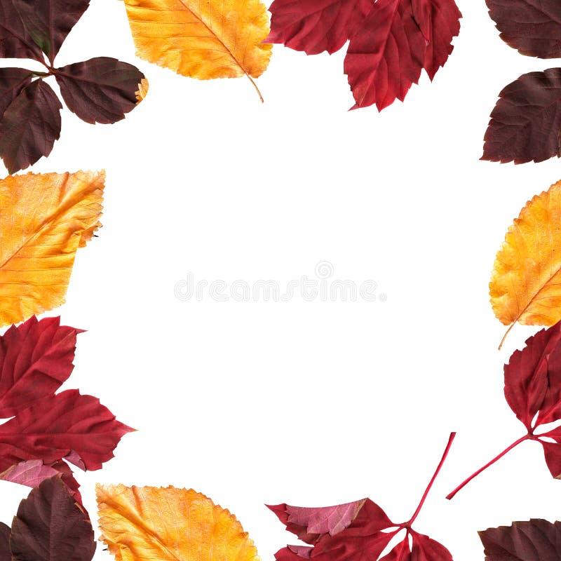 Όμορφο φωτεινό πλαίσιο των φύλλων φθινοπώρου ελεύθερη απεικόνιση δικαιώματος