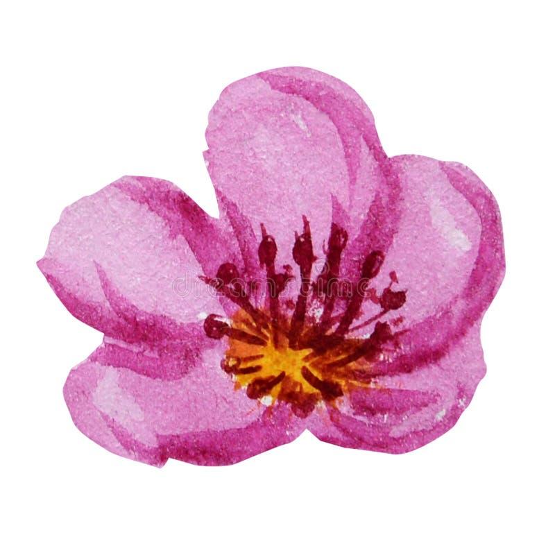 Όμορφο φωτεινό ρόδινο λουλούδι watercolor o διανυσματική απεικόνιση