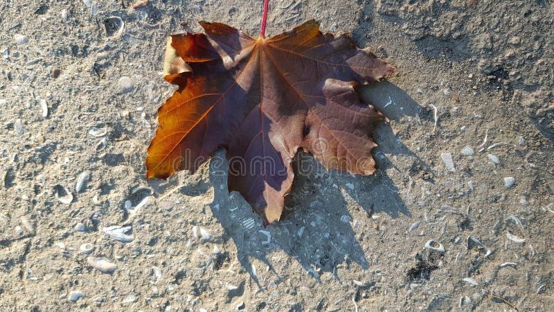 Όμορφο φύλλο σφενδάμου επάνω στην τραχιά κατασκευασμένη επιφάνεια τσιμέντου στοκ φωτογραφίες