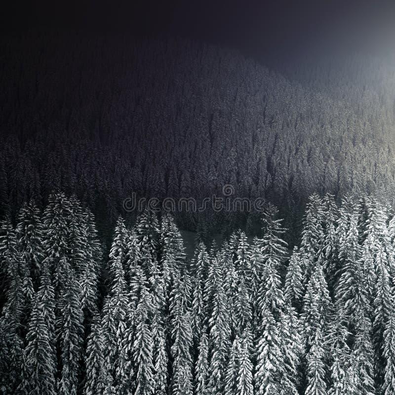 Όμορφο χειμερινό δάσος τη νύχτα στοκ εικόνες