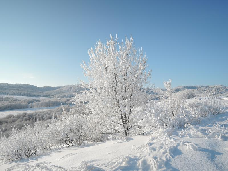 Όμορφο χειμερινό τοπίο με τα λευκά σαν το χιόνι δέντρα που καλύπτονται με τη φωτεινή ηλιόλουστη ημέρα παγετού στοκ εικόνα με δικαίωμα ελεύθερης χρήσης