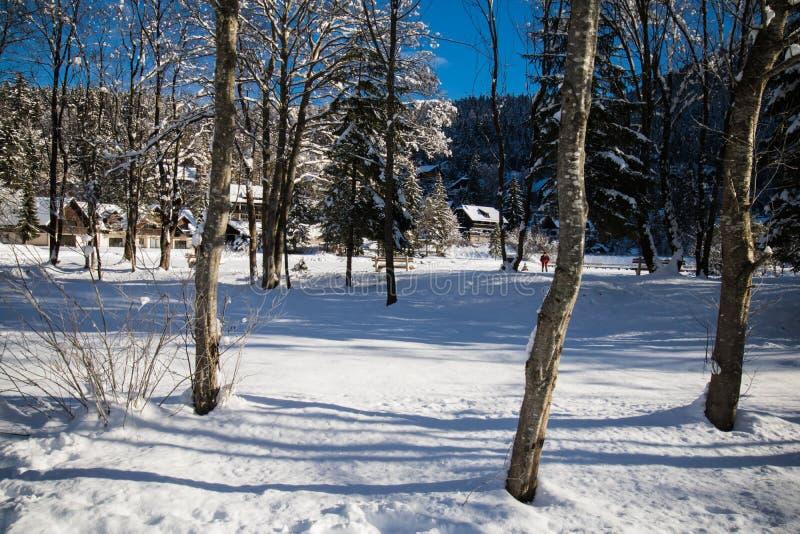 Όμορφο χιονώδες δασικό πάρκο με το υπόβαθρο δέντρων πεύκων στοκ φωτογραφία