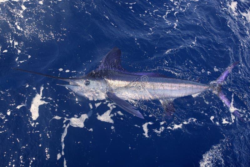 όμορφο billfish marlin αλιείας πραγμ&alpha στοκ φωτογραφίες
