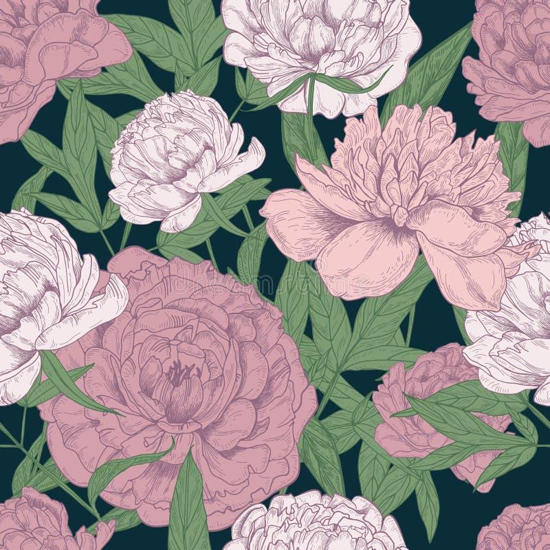 Όμορφο floral άνευ ραφής σχέδιο με τα ρόδινα peonies διανυσματική απεικόνιση
