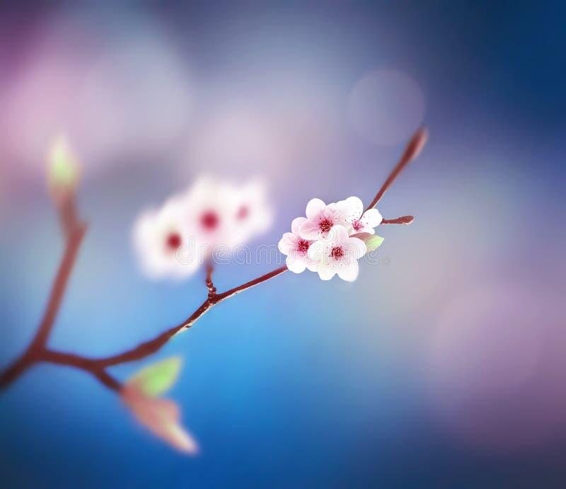 Όμορφο floral αφηρημένο υπόβαθρο άνοιξη της φύσης Κλάδος της άνθησης στο υπόβαθρο μπλε ουρανού στοκ φωτογραφία