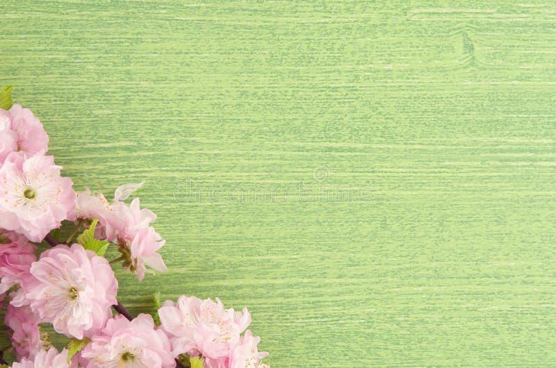 Όμορφο floral υπόβαθρο άνοιξη με το διάστημα αντιγράφων Ρόδινο λουλούδι αμυγδάλων στον κλάδο και φύλλα στο πράσινο ξύλινο επιτραπ στοκ φωτογραφία με δικαίωμα ελεύθερης χρήσης