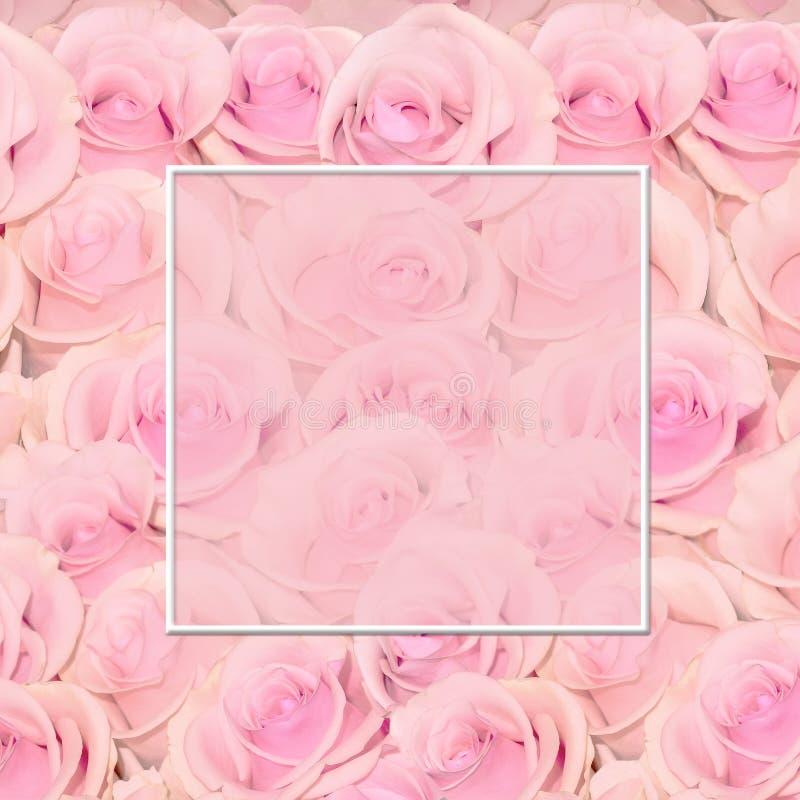 Όμορφο floral υπόβαθρο με τα καταπληκτικά ρόδινα τριαντάφυλλα με το πλαίσιο για το κείμενο διανυσματική απεικόνιση