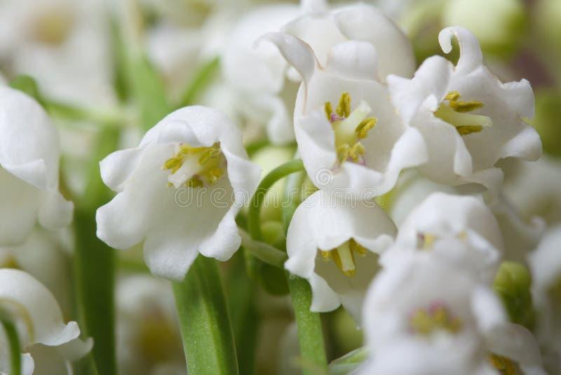 Όμορφο floral υπόβαθρο του κρίνου λουλουδιών της κοιλάδας στοκ εικόνα με δικαίωμα ελεύθερης χρήσης