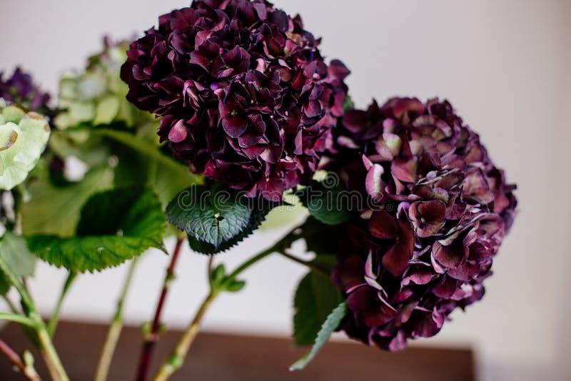 Όμορφο hydrangea σε ένα βάζο στοκ φωτογραφία με δικαίωμα ελεύθερης χρήσης