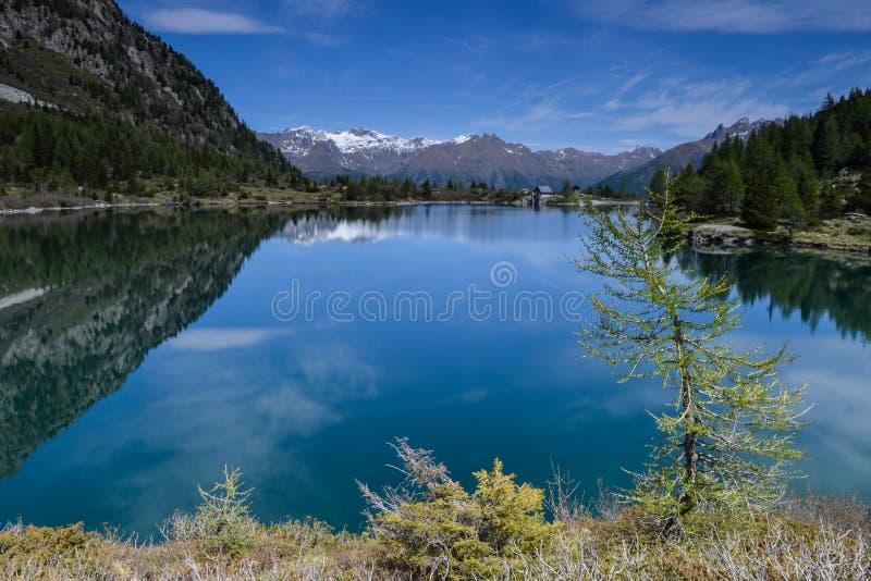 """Όμορφο Lago δ """"Aviolo με την αντανάκλαση και ένα δέντρο στοκ εικόνες"""