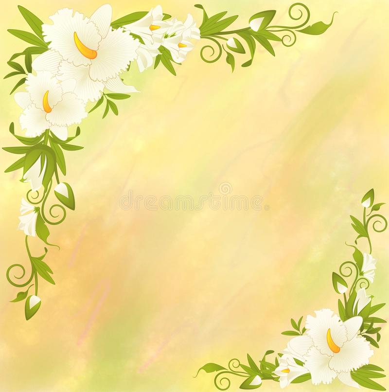 όμορφο orchid κρίνων taffy απεικόνιση αποθεμάτων