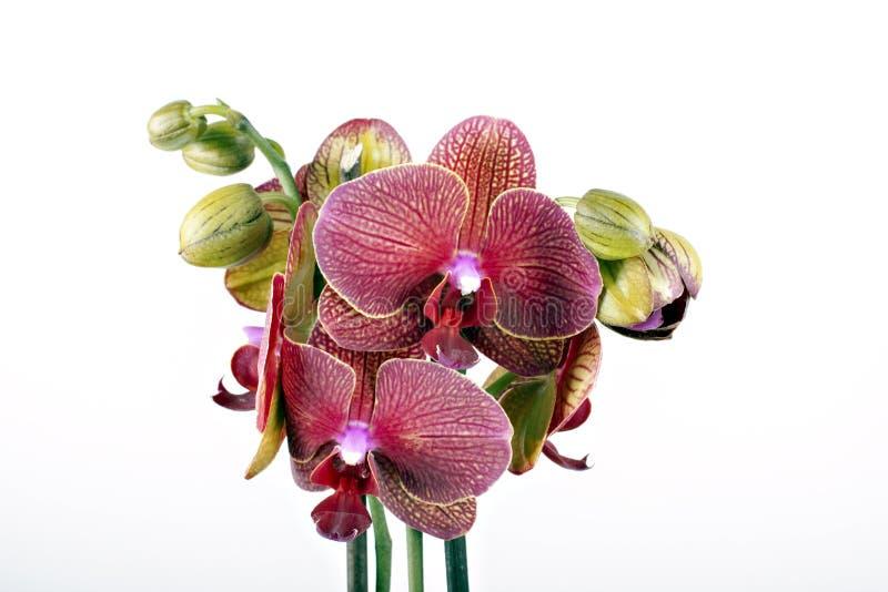 όμορφο orchid λουλουδιών στοκ φωτογραφία με δικαίωμα ελεύθερης χρήσης