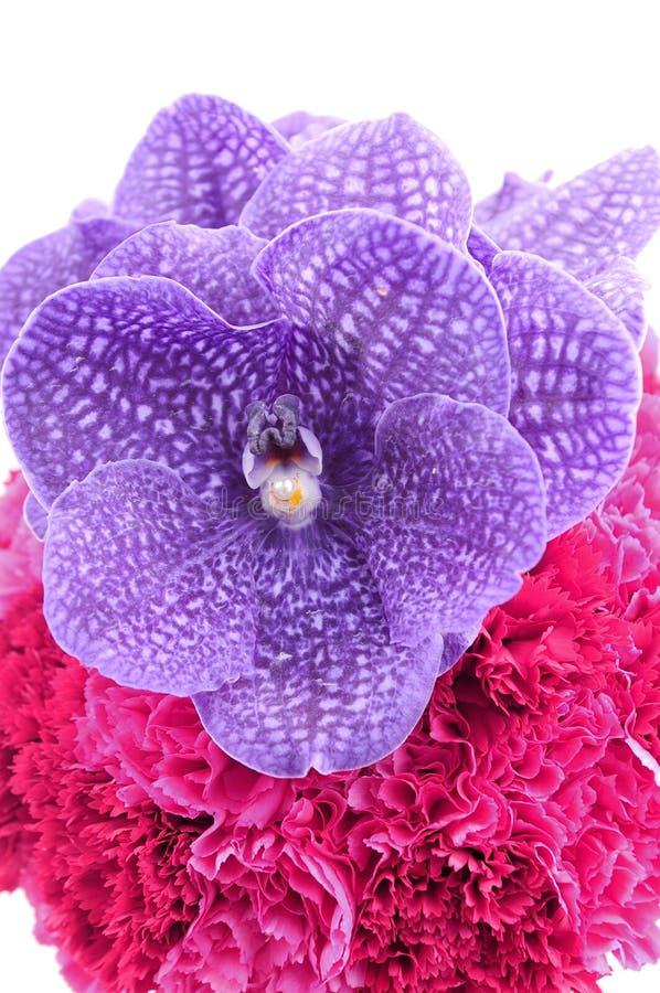 όμορφο orchid λουλουδιών στοκ εικόνα