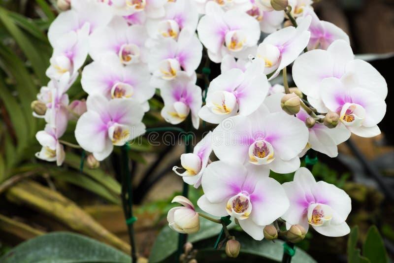 Όμορφο orchid στον κήπο στοκ εικόνα με δικαίωμα ελεύθερης χρήσης