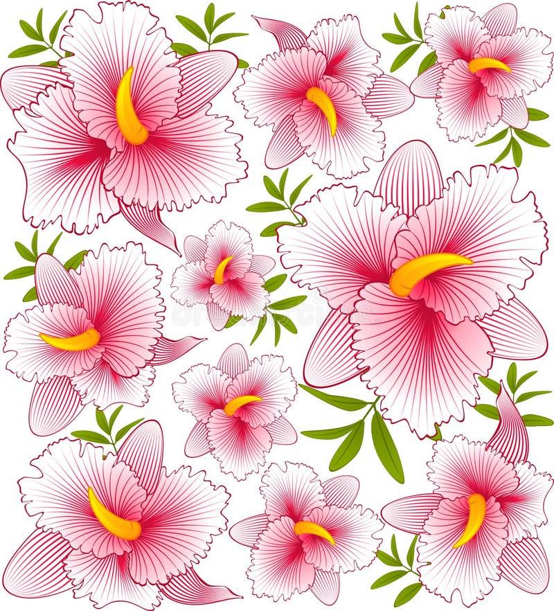 όμορφο orchid ελεύθερη απεικόνιση δικαιώματος