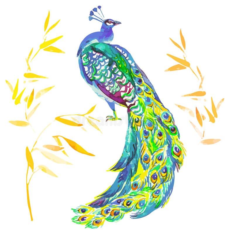 Όμορφο Peacock που απομονώνεται στο άσπρο υπόβαθρο διανυσματική απεικόνιση