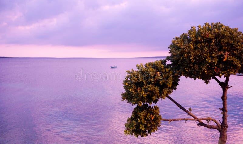 Όμορφο seascape με ένα δέντρο στην μπροστινή πλευρά στο ηλιοβασίλεμα με το πλασματικό ιώδες και πορφυρό χρώμα στοκ εικόνα με δικαίωμα ελεύθερης χρήσης