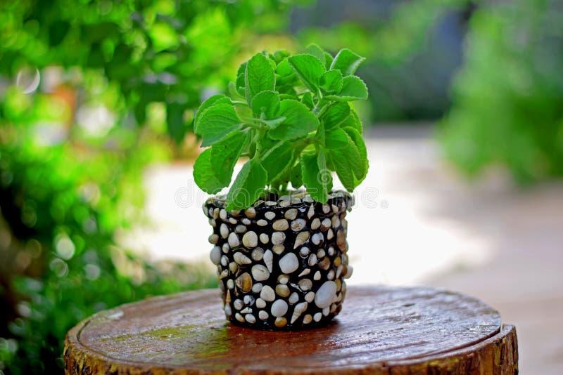 Όμορφο Seashell Planter στοκ φωτογραφίες με δικαίωμα ελεύθερης χρήσης