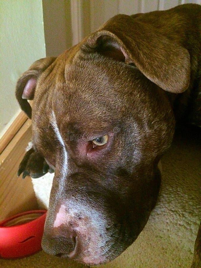 Όνειρα σκυλακιών στοκ εικόνες με δικαίωμα ελεύθερης χρήσης