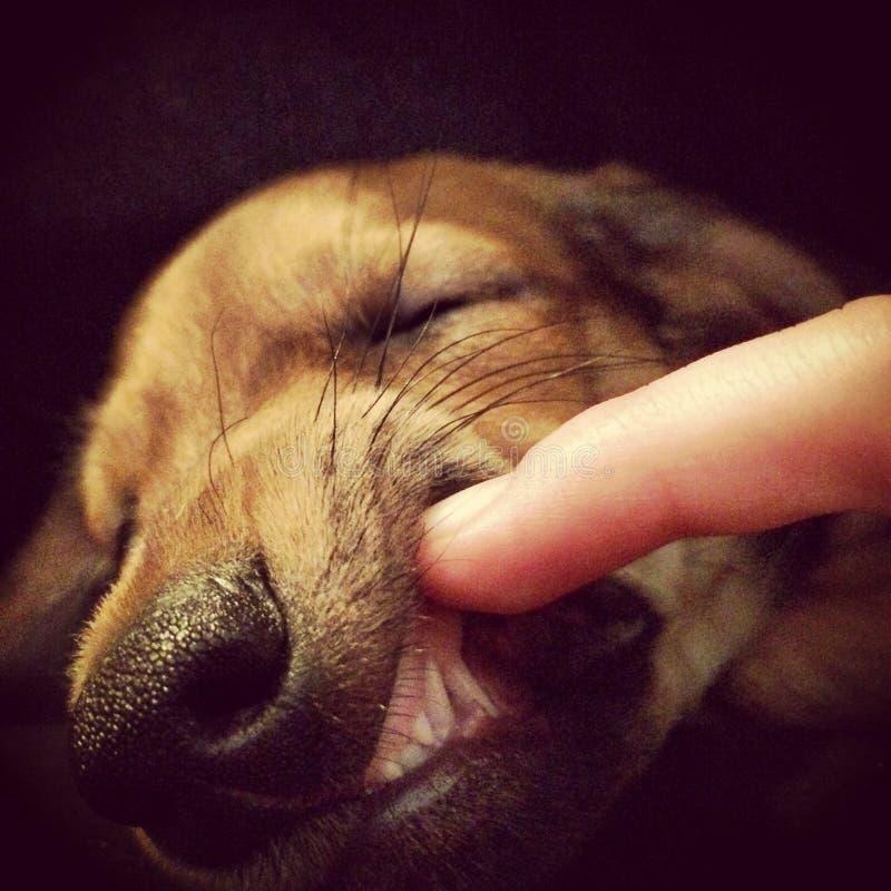 Όνειρα σκυλακιών στοκ φωτογραφία με δικαίωμα ελεύθερης χρήσης