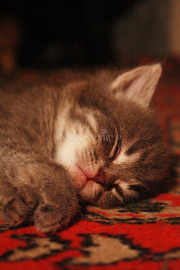 Όνειρο ενός γατακιού παραμυθιού στοκ εικόνες