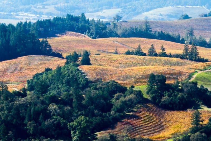 Όνειρο φθινοπώρου - οι άμπελοι σταφυλιών φθινοπώρου χρωματίζουν τα κόκκινα και τα κίτρινα πέρα από τους κυλώντας λόφους Κοιλάδα τ στοκ εικόνες