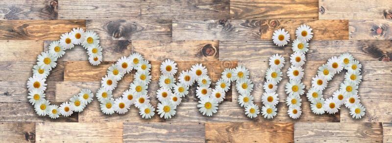 Όνομα Camila Wood Background της Daisy απεικόνιση αποθεμάτων