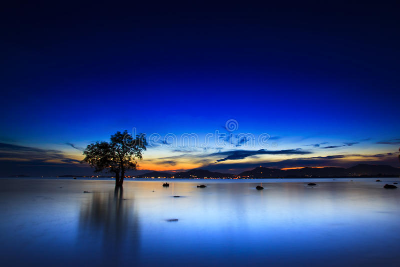 Σκιαγραφία του δέντρου και του ηλιοβασιλέματος στη σιωπηλή παραλία στοκ εικόνες