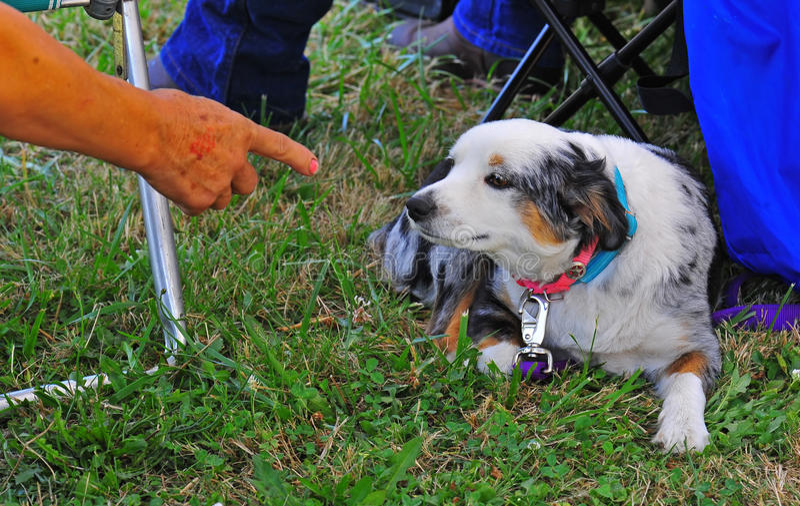 όντας σκυλί που επιπλήττ&epsil στοκ φωτογραφία με δικαίωμα ελεύθερης χρήσης