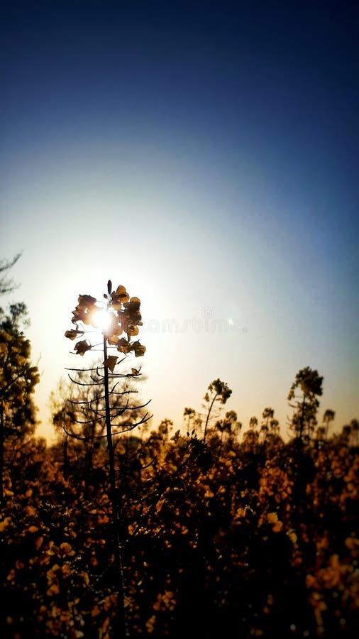 όπως η ανασκόπηση είναι μπορεί να απεικονίσει ηλιόλουστο φυτών χρησιμοποιούμενο στοκ φωτογραφίες με δικαίωμα ελεύθερης χρήσης