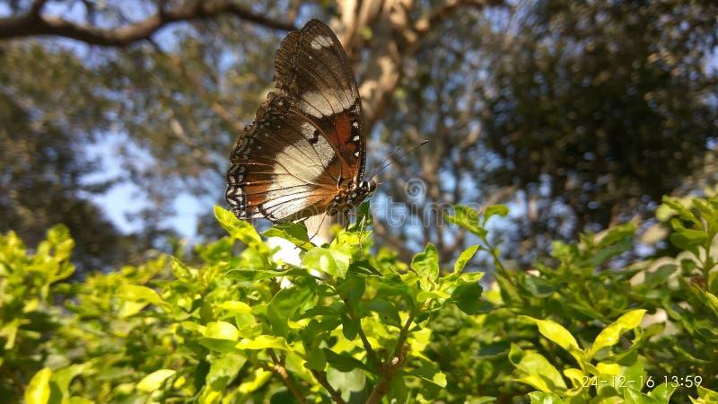 Όπως τη greenary και με όμορφη πεταλούδα στοκ φωτογραφίες με δικαίωμα ελεύθερης χρήσης