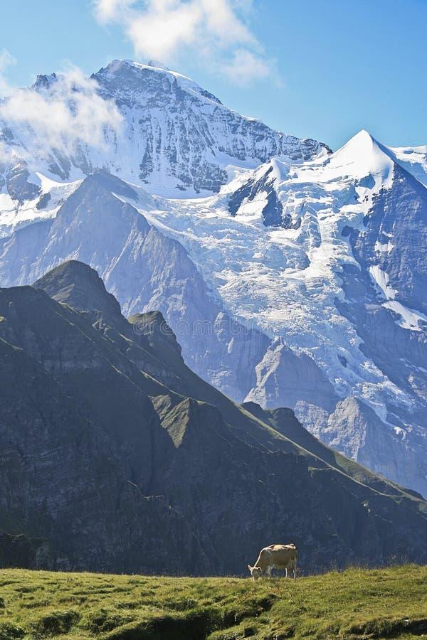 όρη Ελβετός στοκ εικόνες