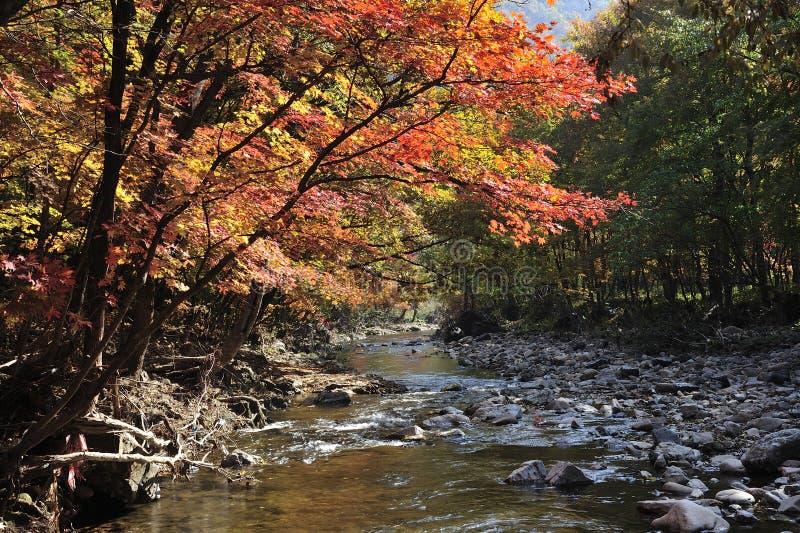 Όχθη ποταμού εποχής φθινοπώρου στοκ φωτογραφία