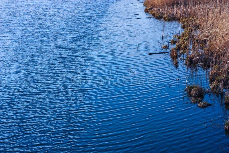 Όχθη ποταμού, κυματισμοί στο νερό, υψηλή χλόη στοκ φωτογραφία με δικαίωμα ελεύθερης χρήσης