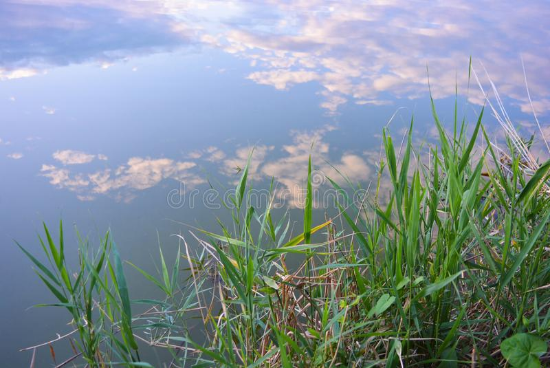Όχθη ποταμού της Samara με τους βεραμάν καλάμους στο νερό Dnipro, Ουκρανία στοκ εικόνες με δικαίωμα ελεύθερης χρήσης