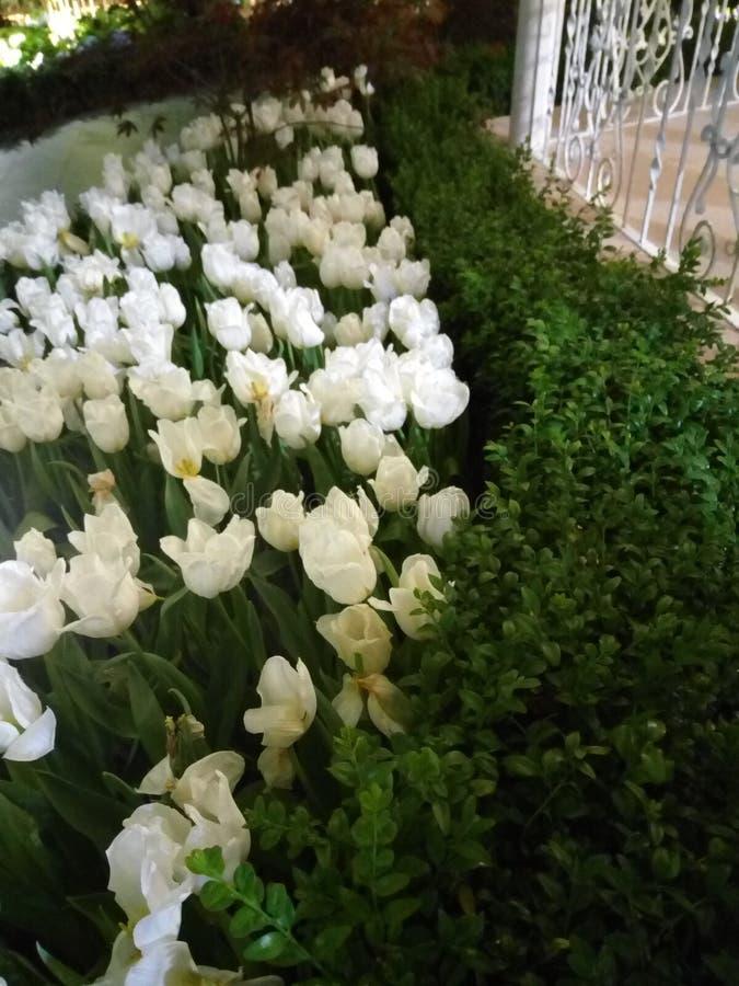 Όλα τα άσπρα λουλούδια στοκ εικόνα με δικαίωμα ελεύθερης χρήσης