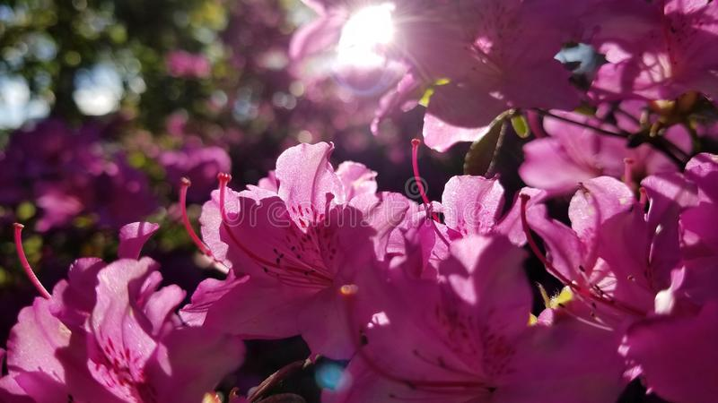 όλο το ροζ στοκ φωτογραφίες