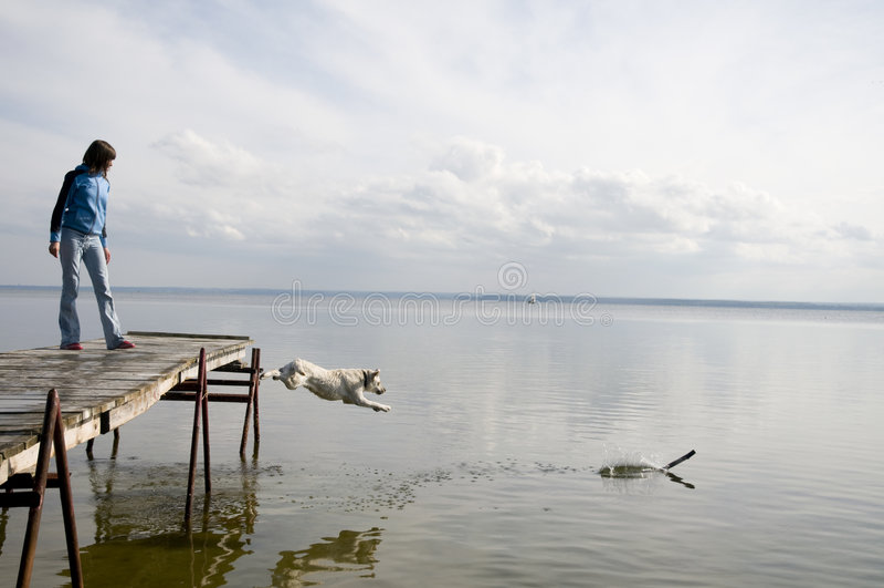 ύδωρ άλματος σκυλιών στοκ εικόνες